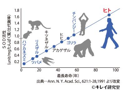 霊長類の寿命とSODの活性