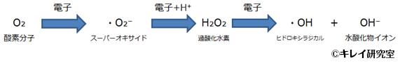 活性酸素の発生源