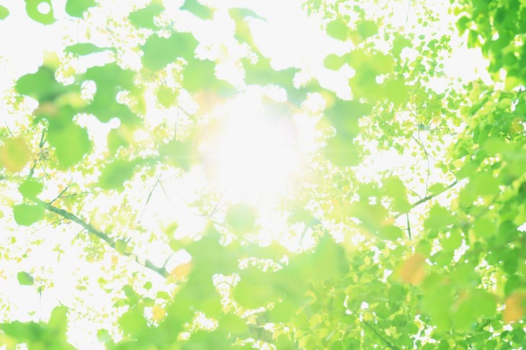http://kirei-lab.jp/wp-content/uploads/2014/06/98b42f28abaa397efabf397b5c18a71b_m-1024x682.jpg